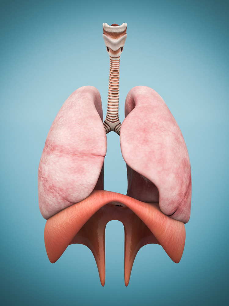"""New """"4-D"""" Lung Cancer Model Could Help Therapy Research"""